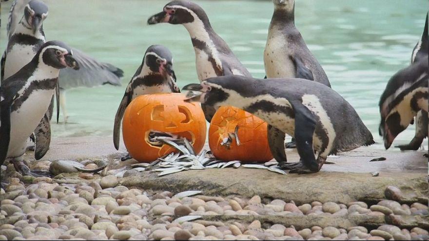 Хэллоуин в зоопарке Лондона