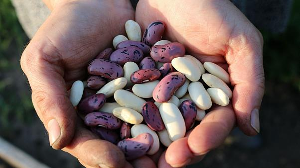 Organik Akkuş fasulyesi fındığın fiyatını 3'e katladı
