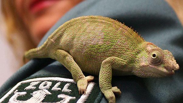 علماء يحذرون من تربية الزواحف كحيوانات أليفة