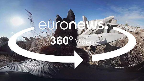 ویدیوی ۳۶۰° درجه: سگ های نجات چگونه برای عملیات امداد آموزش می بینند؟