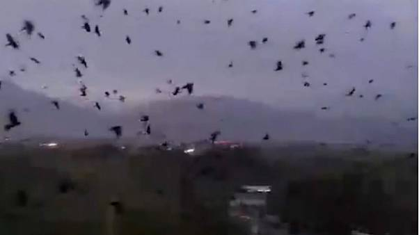 Murder of crows spreads fear in Tajikistan