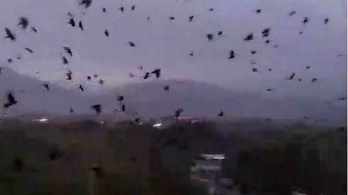 بالفيديو: مشهد مخيف لغربان تغزو سماء تورسونزودا في طاجكستان