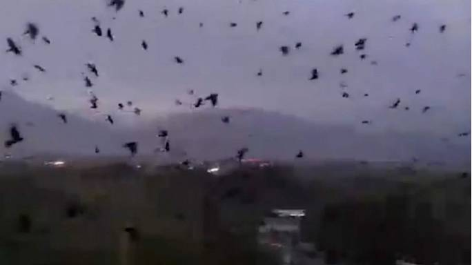 Gruselige Szene: Riesiger Schwarm Krähen verbreitet Angst in Tadschikistan