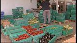 Ambargo bitti Türk gıda ürünleri yeniden Rusya'da