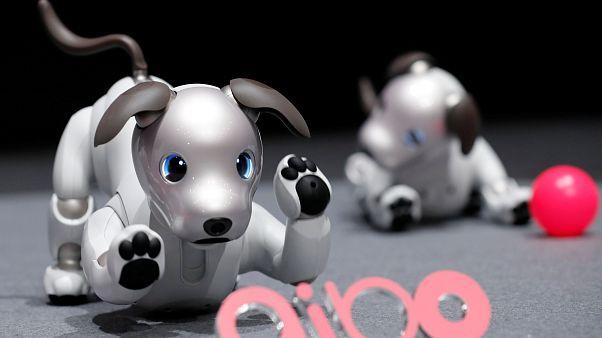 """الكلب """"أيبو"""".. روبوت جديد من سوني"""