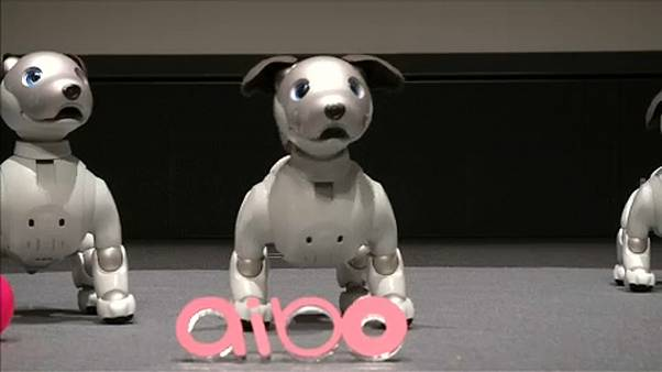 Возвращение робопса: aibo вместо AIBO