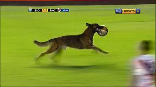 بالفيديو: لاعبون يطاردون كلب اقتحم مبارة لكرة القدم