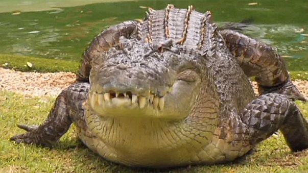 هندي يستيقظ ليجد تمساحا بطول 4 أمتار في غرفته