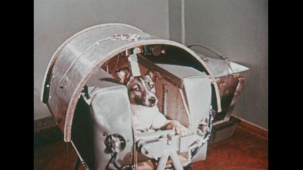 """الكلبة السوفييتية """"لايكا"""".. أول كائن حي يسافر إلى الفضاء قبل 60 عاما"""