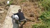 القبض على افعى ضخمة في الصين بعد التهامها لقط