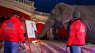 Sandra, l'éléphante artiste