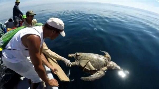 В Сальвадоре гибнут черепахи