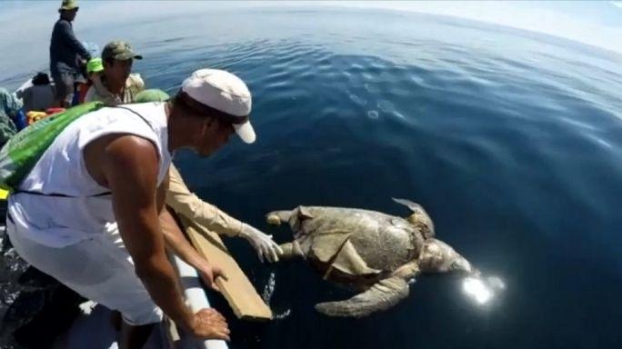Catástrofe ecológica en El Salvador