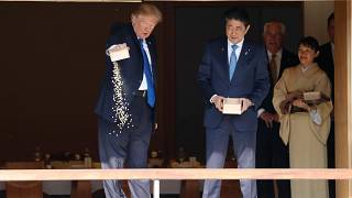 Trump dumps full box of fish food into Japanese koi pond