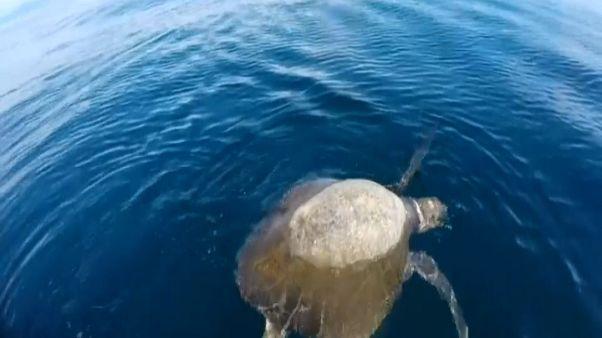 Misteriosa moria di tartarughe marine a El Salvador