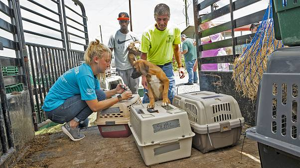 Image: Tropical Storm Barry animal evacuations