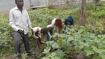 Congo : des enfants à l'école de l'indépendance alimentaire
