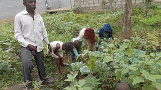 Journée mondiale de l'alimentation : au Congo, des enfants préparent leur avenir alimentaire