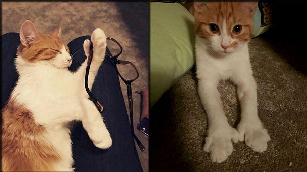 Feline sad: internauts mourn death of prime minister's cat