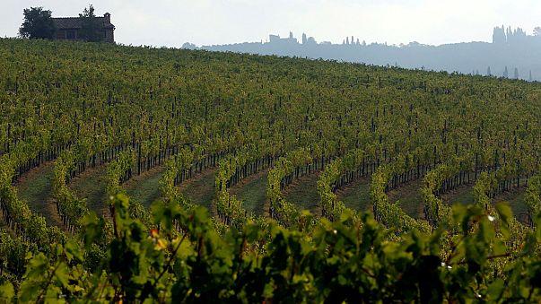 2017, annus horribilis para el vino en España, Italia y Francia