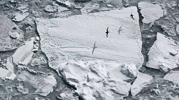 Explorers bid to become first to reach South Pole using only green power