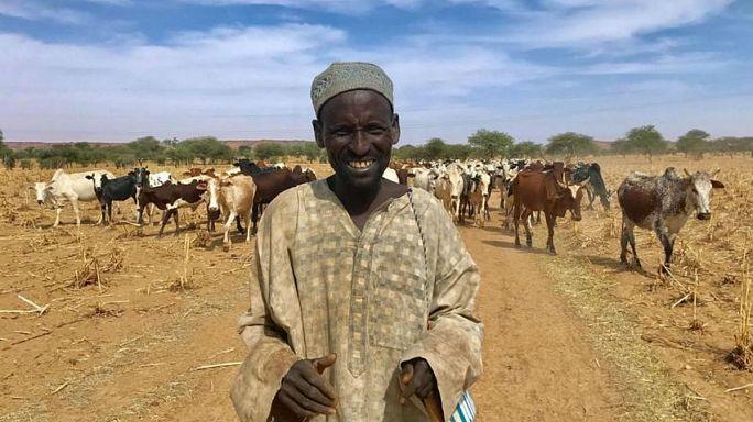 كيف تحول رعاة الماشية في النيجر ومالي إلى متشددين؟