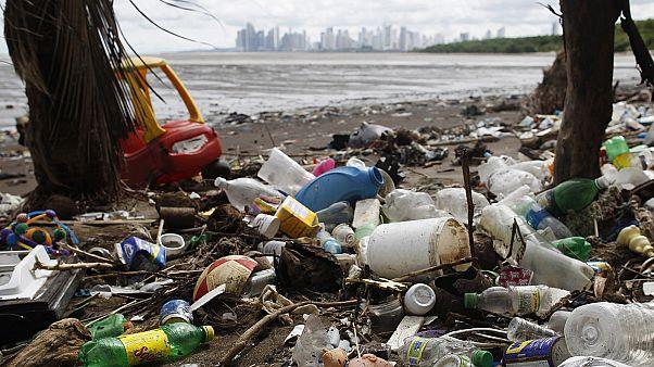 COP23: Dünyanın akciğerleri okyanusları korumak hayati önem taşıyor