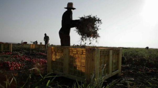 Agricultura na UE: Portugal é o país onde há mais trabalho ilegal