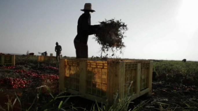 Up to 60% of workers illegal on EU farms