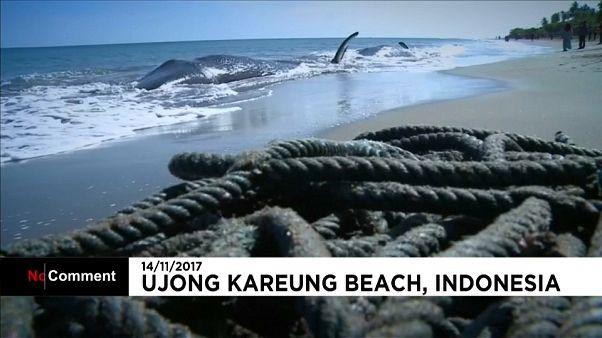 أربعة حيتان تصل نافقة الى شواطئ اندونيسيا