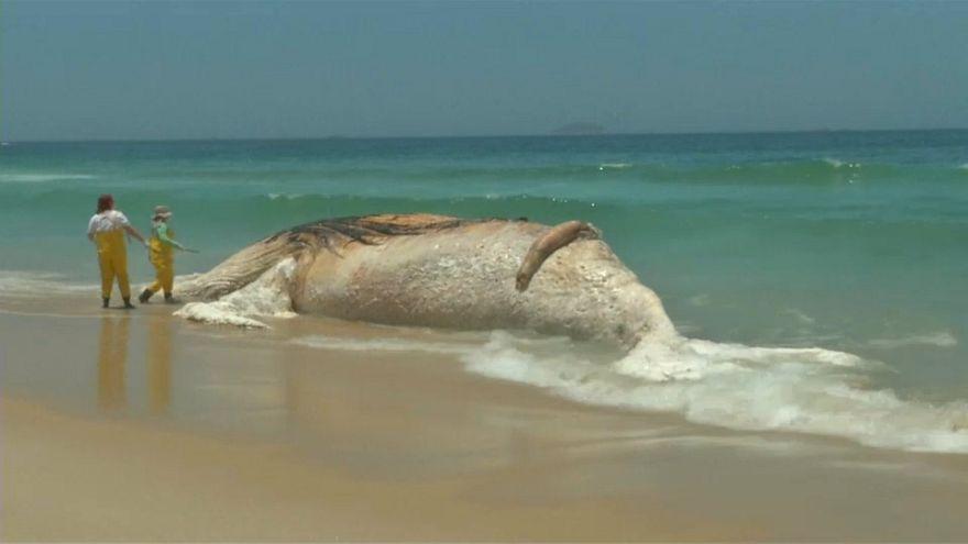 Bomló bálnatetem mellett strandoltak a rióiak