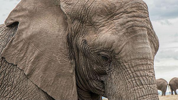 US to legalise importation of elephant trophies from Zimbabwe