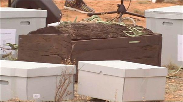 إعادة دفن أقدم رفات بشرية في استراليا عمرها 42 ألف سنة