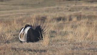 USA: Gefährdete Wildnis