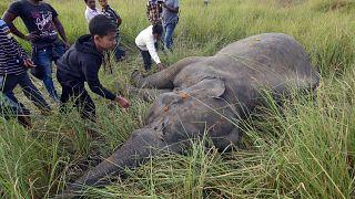 2 hungrige Elefanten von Zug überfahren