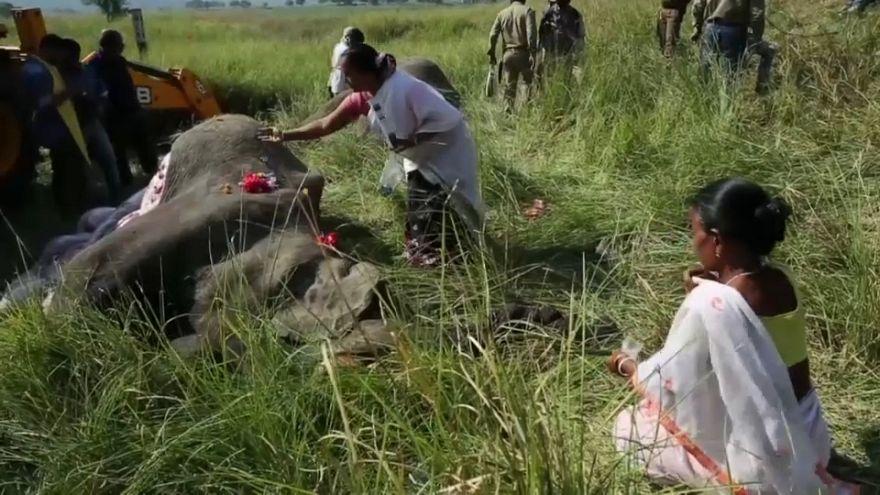 نفوق فيليْن بعد أن صدمهما قطار في الهند