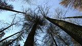 Η κυβέρνηση καταστρέφει παρθένο δάσος