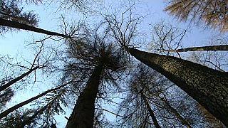 Erdőírtás vagy erdőmentés?