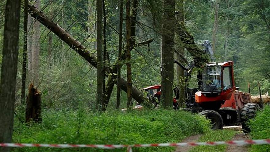 Poland facing huge fines over ancient forest logging