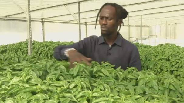 South African urban farmers grow herbs and crops on rooftops
