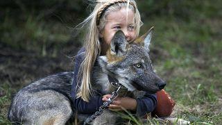 Farkasgyerekek, a háború árvái