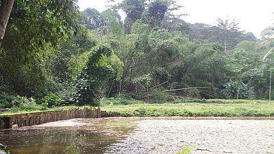 Côte d'Ivoire : des occupants d'une aire protégée saccagent des bureaux des Eaux et Forêts