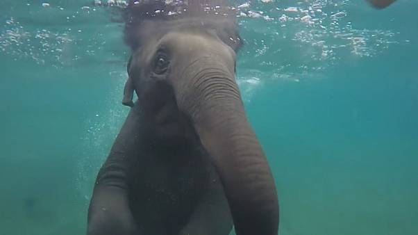 Baby-Elefant taucht und planscht