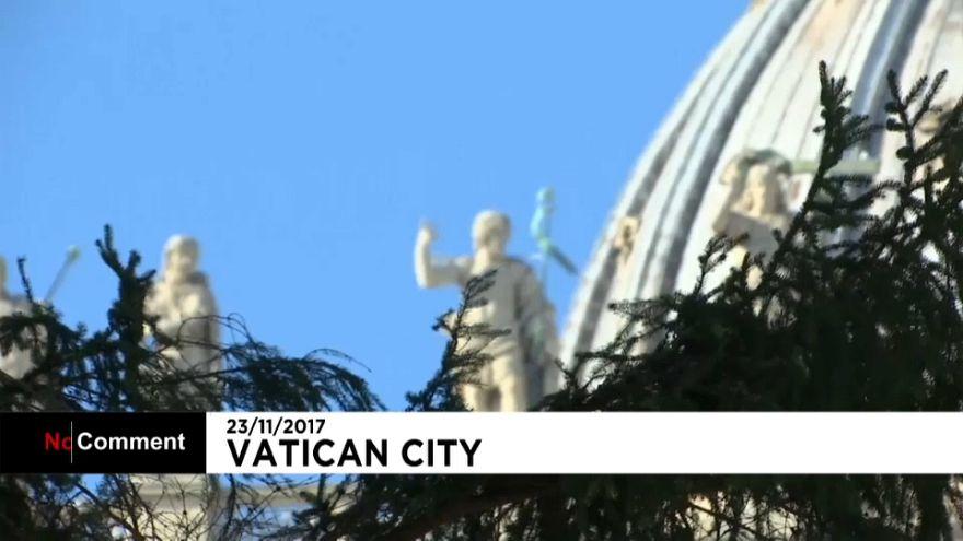 Mammutaufgabe: 28-Meter-Weihnachtsbaum im Vatikan eingetroffen