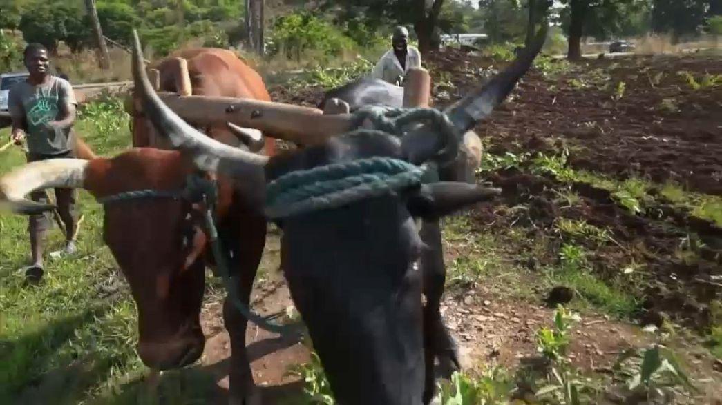 Medo persiste no Zimbabué rural