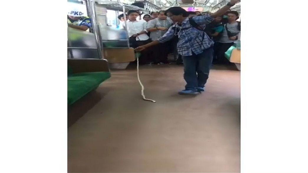 رجل قتل ثعبانا بيديه في قطار بجاكارتا