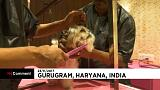 Hungry bears caught on camera and pampered pooches enjoy luxury Indian dog hotel