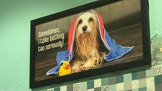 Luxushotel für Hunde