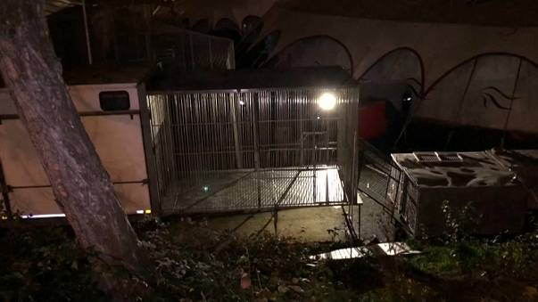 200 Kilo schwerer Tiger in Paris erschossen