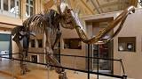 15,000-year-old mammoth skeleton heads for auction